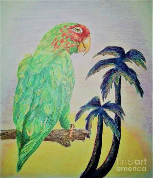 Green Parrot Drawing - Tropical Parrot by RC Art and Photography
