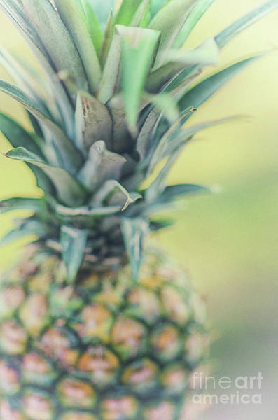 Photograph - Tropical Pineapple Fruit by Dale Powell