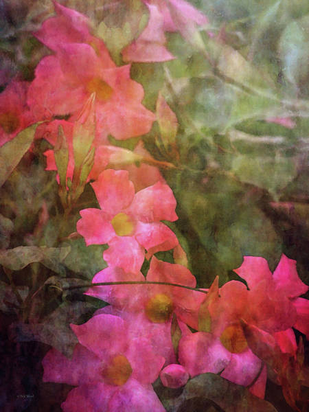 Photograph - Tropical Pink 2493 Idp_2 by Steven Ward