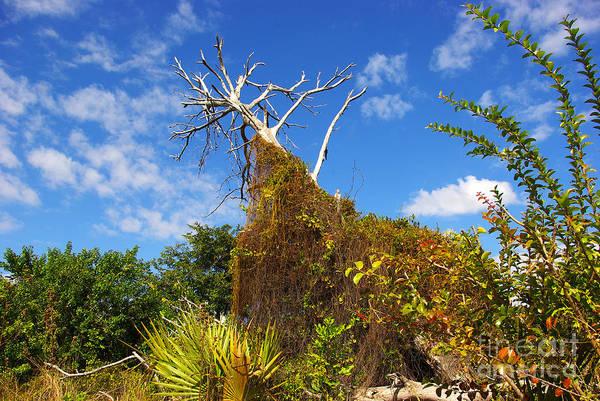 Wall Art - Photograph - Tropical Plants In A Preserve In Florida by Zal Latzkovich