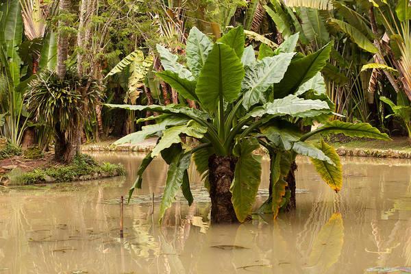 Photograph - Tropical Plants In Rio De Janeiro Botanical Gardens by Aivar Mikko