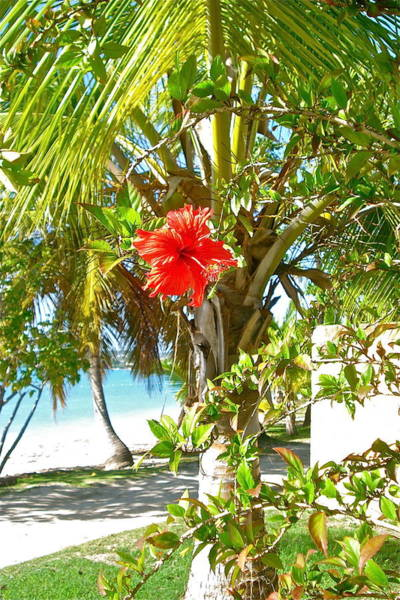 Tropical Spring Flower Art Print