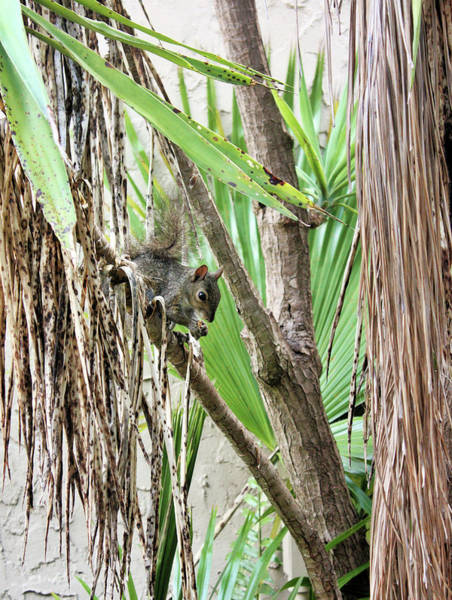 Photograph - Tropical Squirrel by Kristin Elmquist