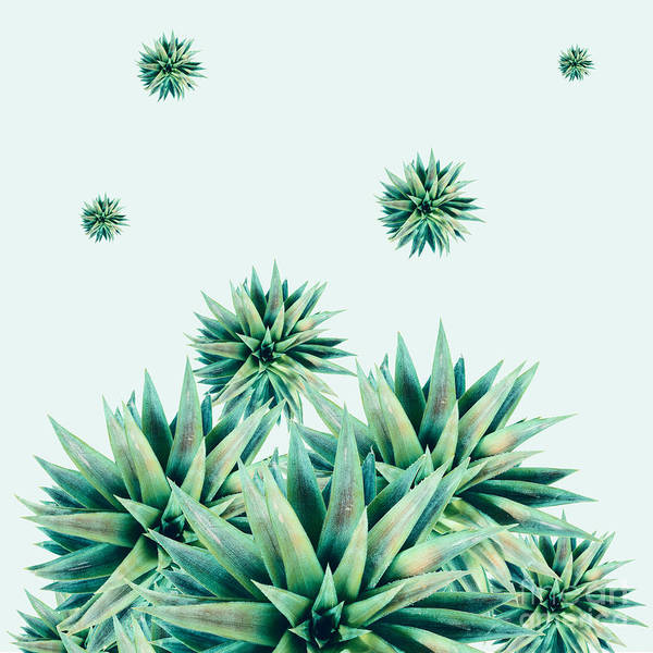 Succulent Wall Art - Photograph - Tropical Stars  by Mark Ashkenazi