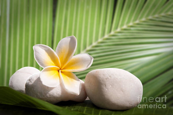 Frangipani Photograph - Tropical Still Life by Delphimages Photo Creations