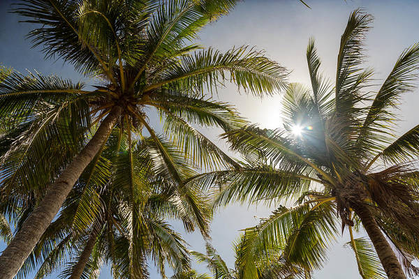 Photograph - Tropical Sun by James BO Insogna