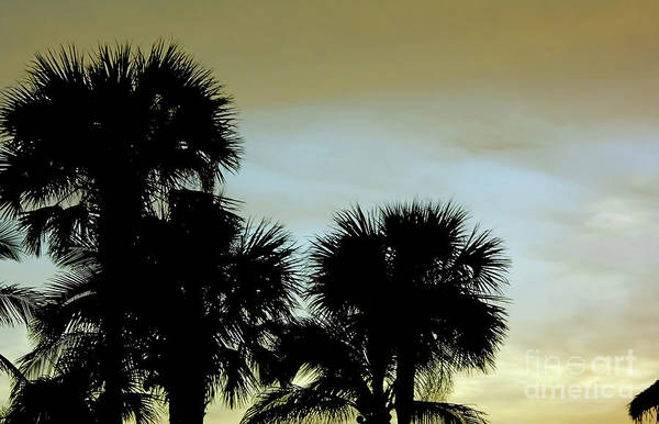 Photograph - Tropical Sunset By God by D Hackett