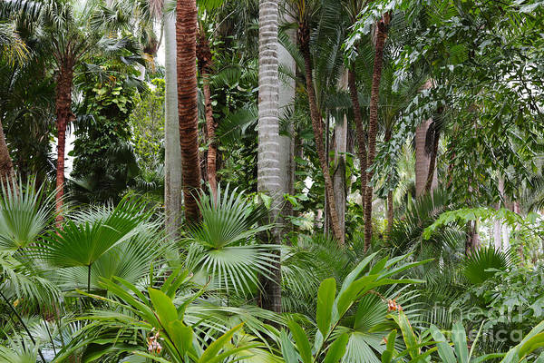 Photograph - Tropical Trees by Carol Groenen