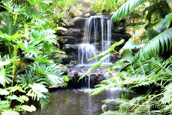 Green And Gray Photograph - Tropical Waterfall by Carol Groenen