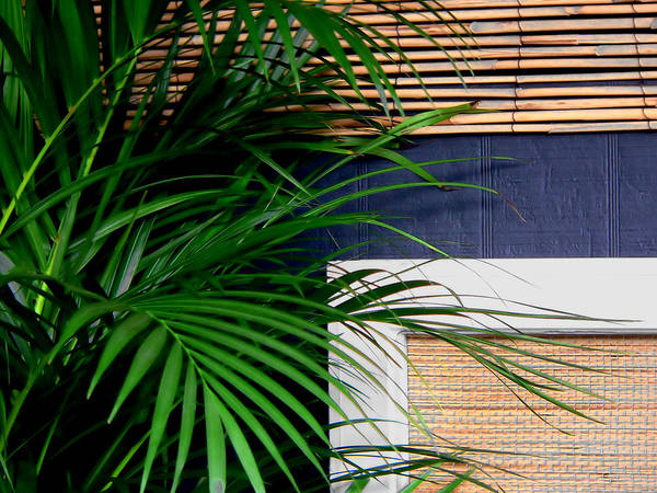 Photograph - Tropical Window by Kathy K McClellan