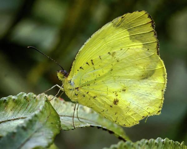 Photograph - Tropical Yellow Jardin Botanico Del Quindio Colombia by Adam Rainoff