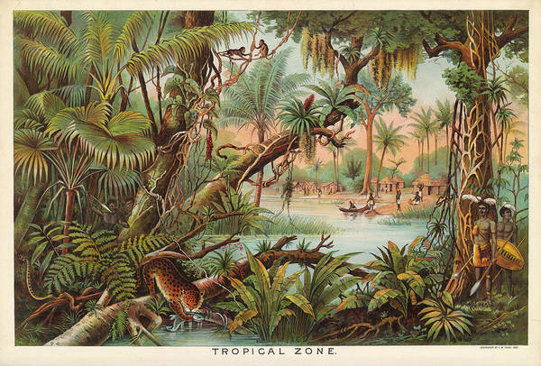 Tropical Drawing - Tropical Zone - Illustrated Atlas - Old Historic Chart - Tropical Vegetation - Tribals Hunting by Studio Grafiikka