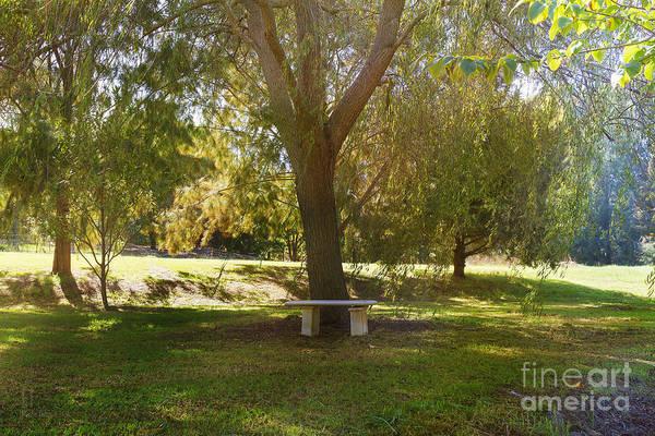 Photograph - Trotts Cottage Garden by Elaine Teague