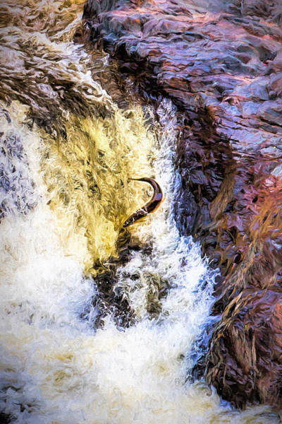 Photograph - Trout Jumping by Susan Rissi Tregoning