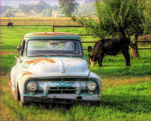 Photograph - Truck And Cows Living Together by David King
