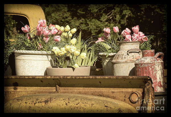 Photograph - Truck Tulips by Imagery by Charly