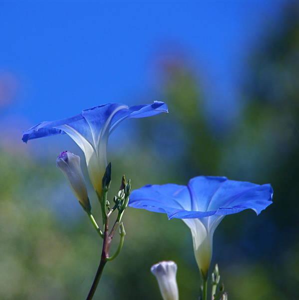 Photograph - True Blue by Byron Varvarigos