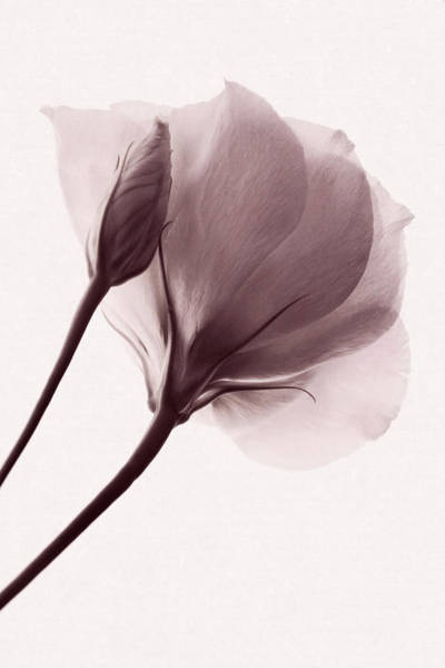 Photograph - Truly Transient by Leda Robertson
