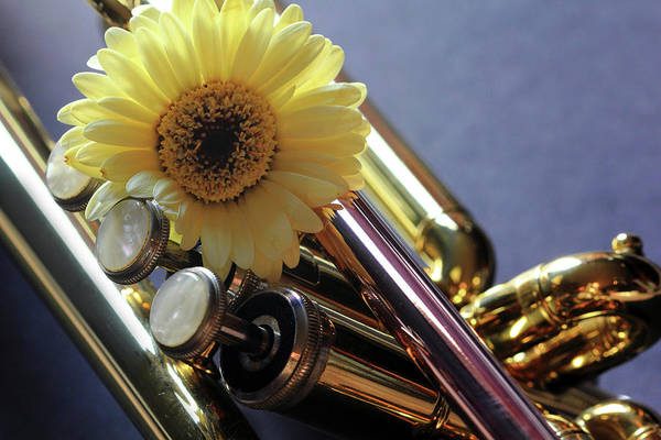 Photograph - Trumpet And Flower by Angela Murdock