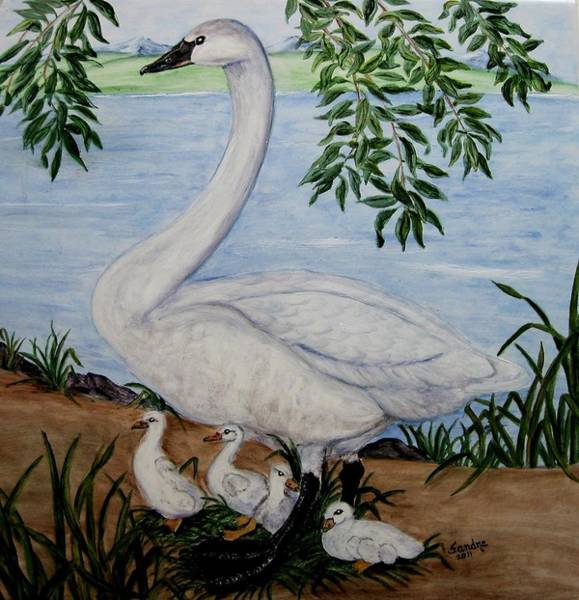 Trumpeter Swan Painting - Trumpeter Swan And Cygnets by Sandra Maddox