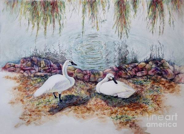 Trumpeter Swan Painting - Trumpeter Swan Cove by DParins Zich