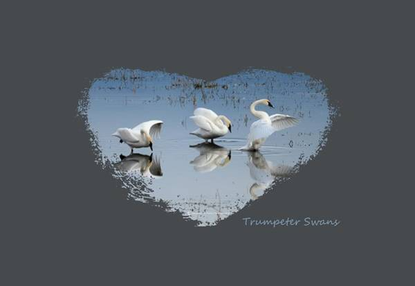 Wall Art - Photograph - Trumpeter Swans by Whispering Peaks Photography