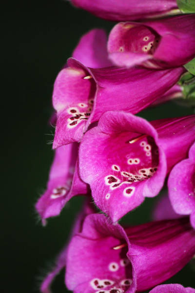Neon Pink Photograph - Trumpets by Marnie Patchett