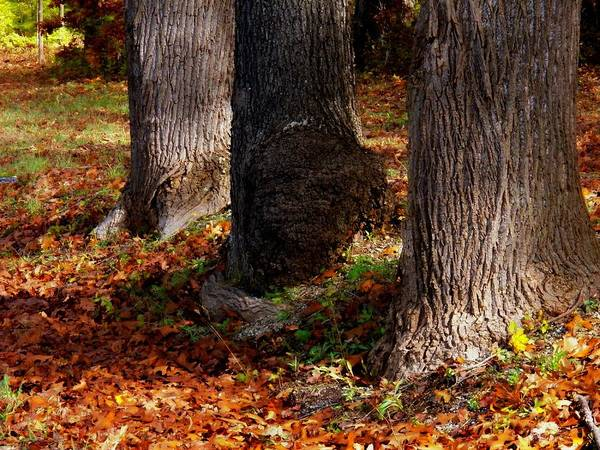 Wall Art - Photograph - Trunk And Leaves by Joyce Kimble Smith