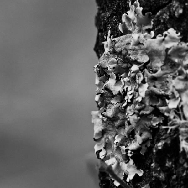 Vegetal Photograph - Trunk by Felix M Cobos