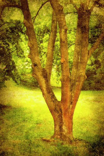 Photograph - Trunk by Peter Fodor