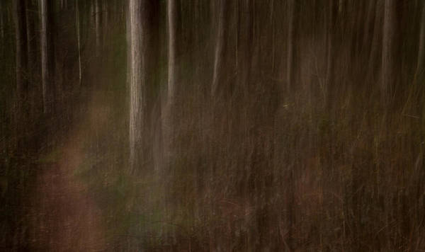 Nottingham Photograph - Trunks by Chris Dale