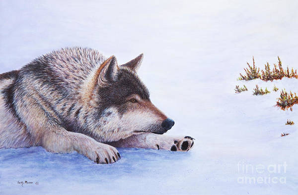 Arctic Wolf Painting - Trying To Nap by Sandy Moser