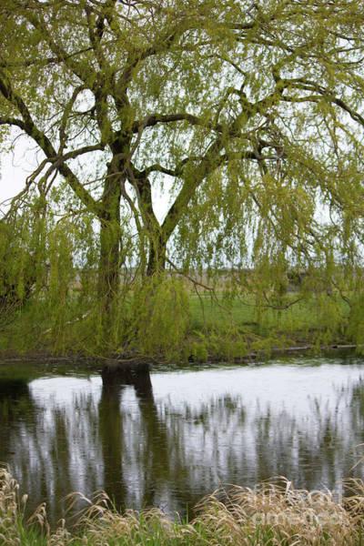 Photograph - Tsawassen Duck Pond by Donna L Munro