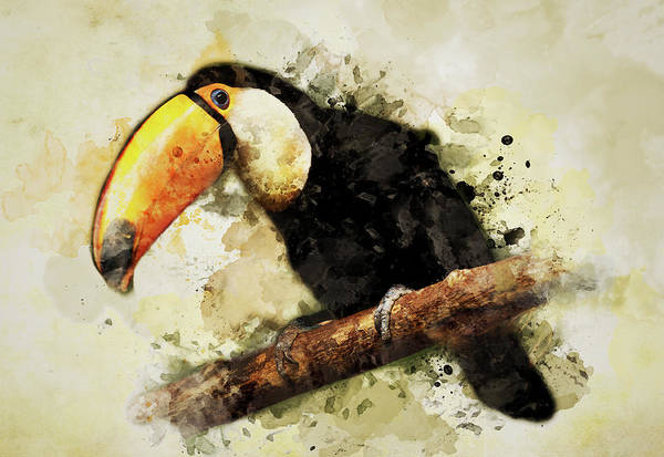 Photograph - Tucan On The Branch by Jaroslaw Blaminsky