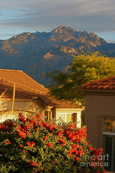 Rooftops Photograph - Tucson Beauty by Nadine Rippelmeyer