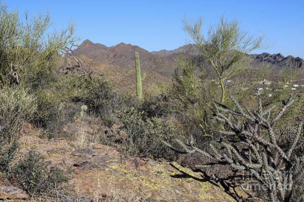Photograph - Tucson Desert Vista by Jemmy Archer