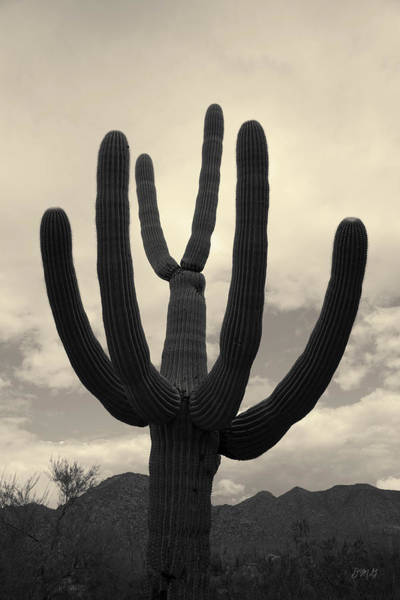 Photograph - Tucson II Toned by David Gordon