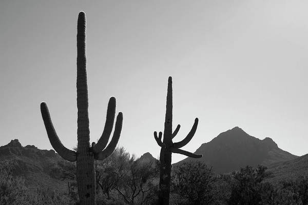 Photograph - Tucson Iv Bw by David Gordon