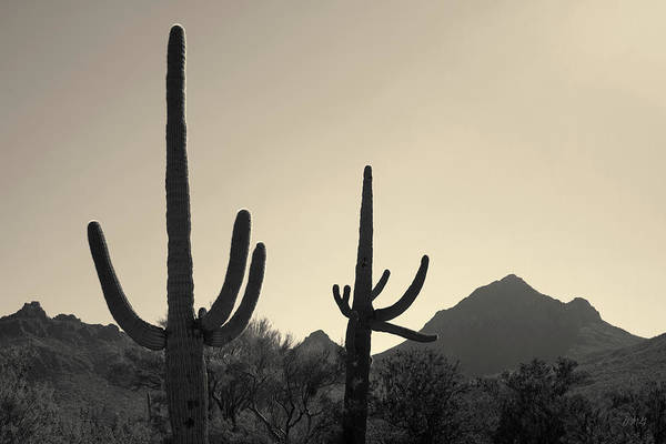 Photograph - Tucson Iv Toned by David Gordon