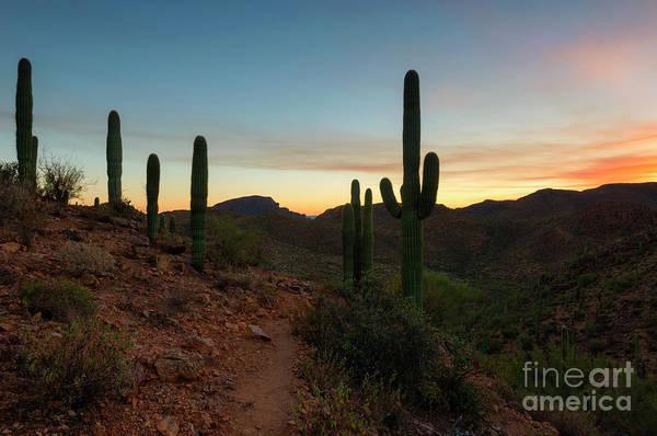 Tucson Photograph - Tucson Mountain Sunset by Mike Dawson