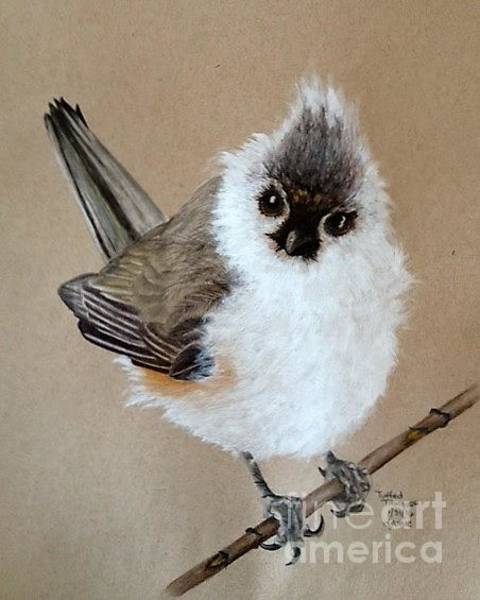 Titmouse Drawing - Tuffed Titmouse Two by Jamie Silker