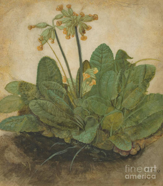 Perennial Painting - Tuft Of Cowslips by Albrecht Durer