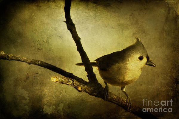 Wildbird Photograph - Tufted Titmouse - Weathered by Lana Trussell