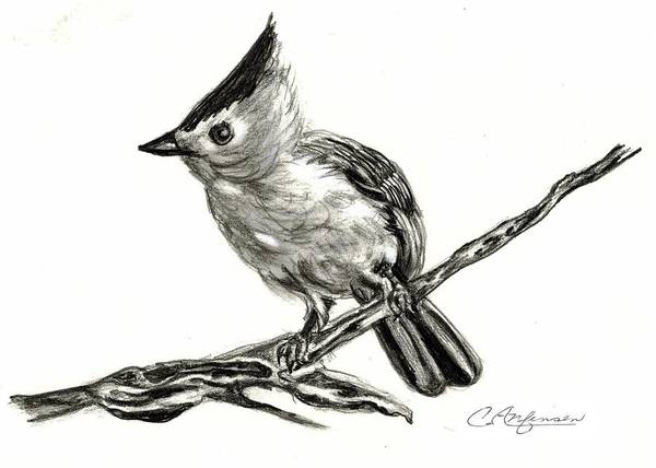 Titmouse Drawing - Tufted Titmouse by Carol Allen Anfinsen