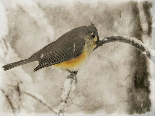 Digital Art - Tufted Titmouse Perching In A Snow Storm by Rusty R Smith