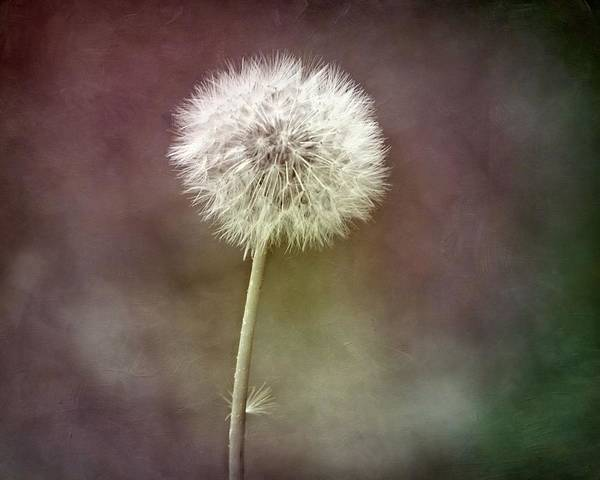 Photograph - Tufty Puff by Patricia Strand