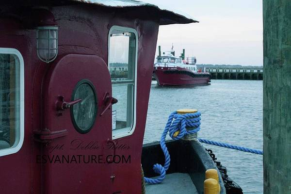 Photograph - Tug Boat Tie by Captain Debbie Ritter