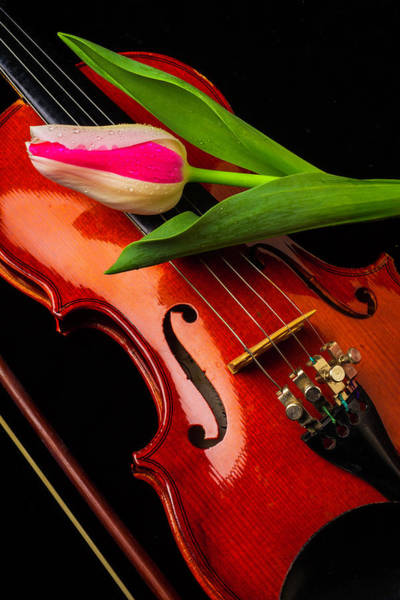 Distinctive Wall Art - Photograph - Tulip And Violin by Garry Gay
