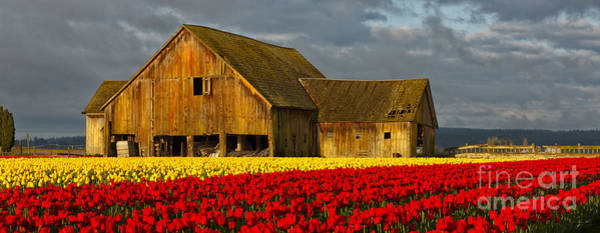 Photograph - Tulip Barn by Beve Brown-Clark Photography