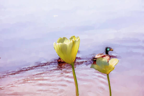 Photograph - Tulip Duck #g1 by Leif Sohlman